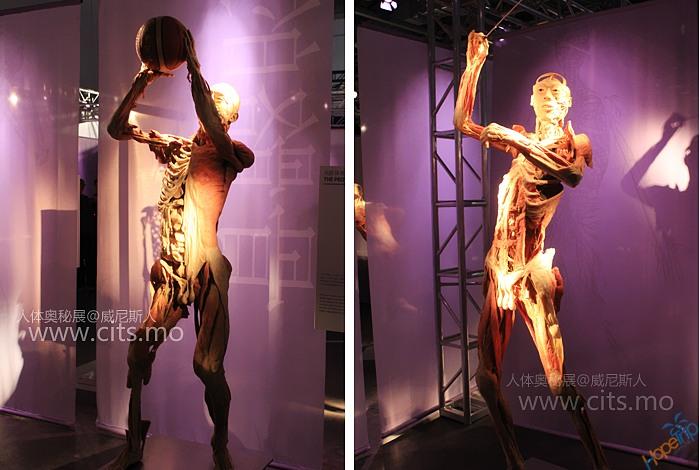 澳门人体表演_澳门「人体奥秘展」让你更了解你自己