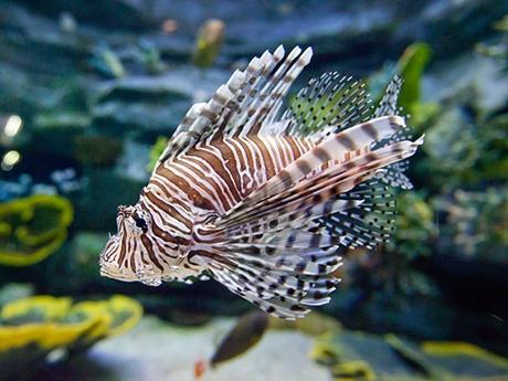 韓國首爾樂天世界+水族館套票,樂天世界水族館門票