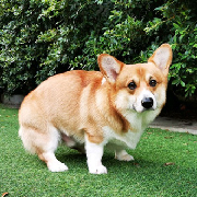 曼谷Dog in Town狗狗主題咖啡廳