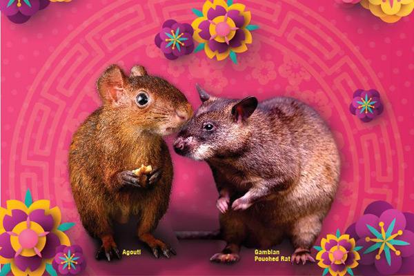 新加坡動物園春節活動2020 新加坡夜間動物園春節活動2020 新加坡河川生態園春節活動2020 新加坡動物園聯合活動 新加坡動物園過春節