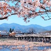 京都名勝一日遊(伏見稻荷大社+祇園舞妓表演+嵐山+相撲火鍋午餐吃到飽)
