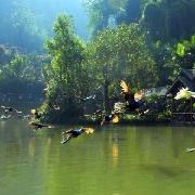 西雙版納原始森林公園